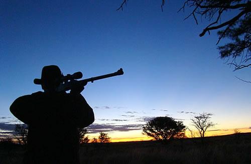 jagen op ganzen